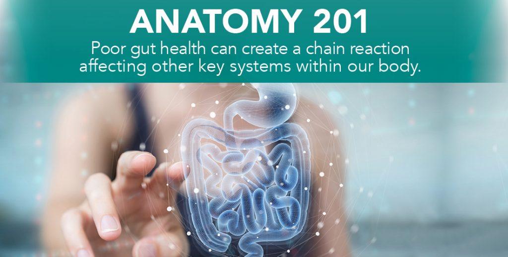 DIGESTIVE HEALTH SERIES: ANATOMY 201